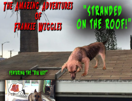 The Amazing Adventures of Frankie Wiggles – Stranded on the Roof!
